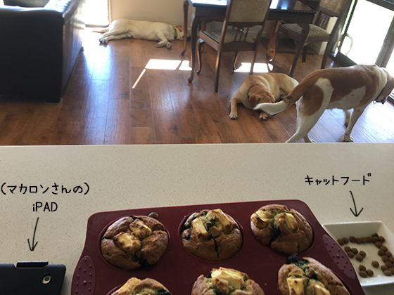 16092019_dogpic1.jpg