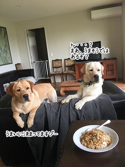 20012020_dogpic4.jpg