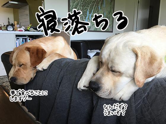 20012020_dogpic5.jpg