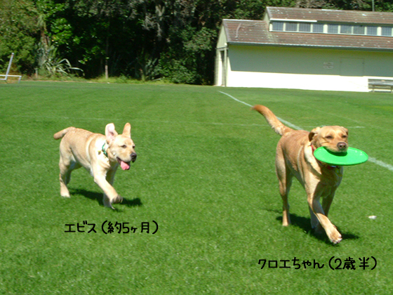 20022020_dogpic1.jpg