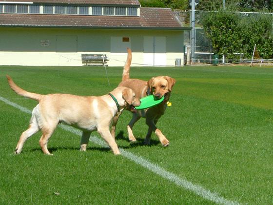 20022020_dogpic2.jpg