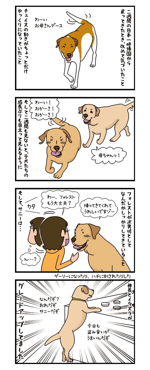 22112019_dog4koma.jpg