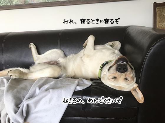 23022020_dogpic1.jpg