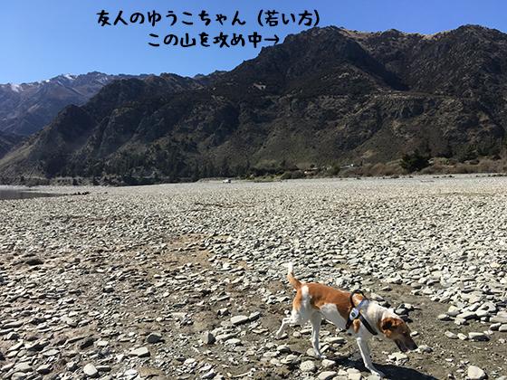 24092019_dog2.jpg