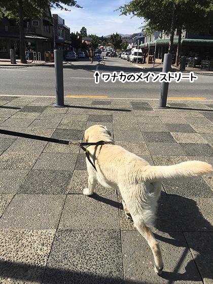 25022020_dogpic1.jpg