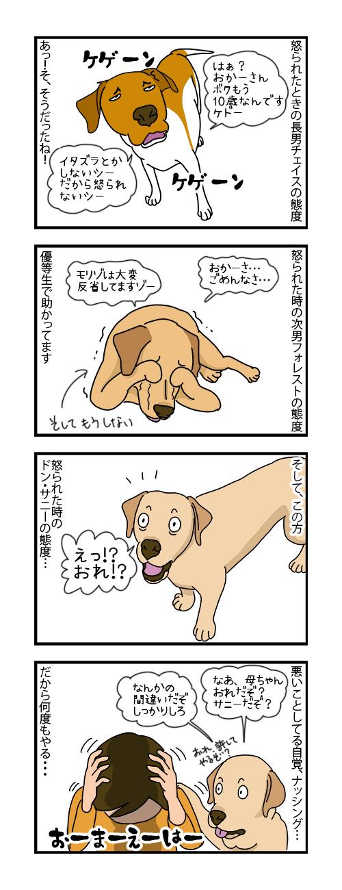 25112019_dog4koma.jpg