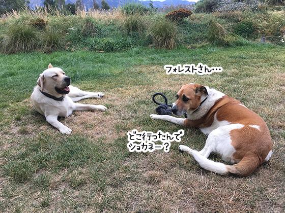 28022020_dogpic2.jpg