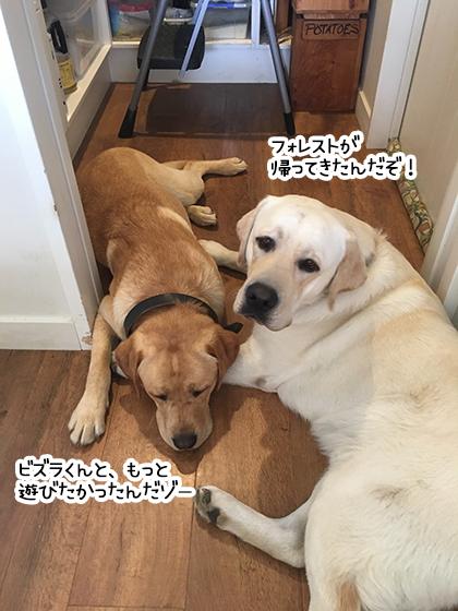 28022020_dogpic4.jpg