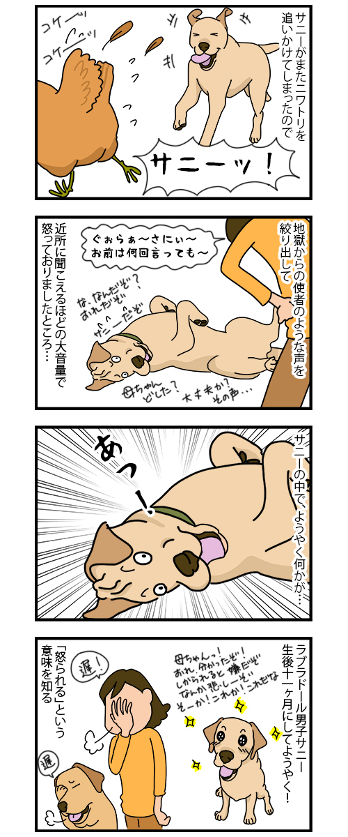 28112019_Dog4koma_mini.jpg