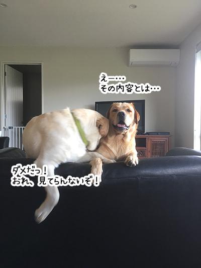 29012020_dog3.jpg