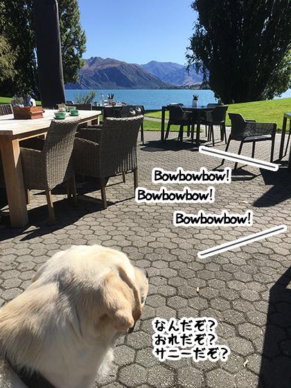 29022020_dogpic3.jpg