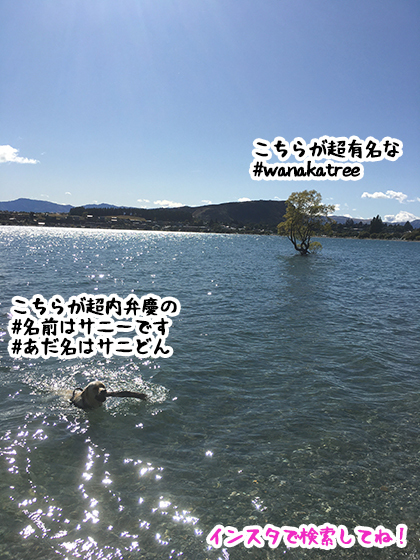29022020_dogpic5.jpg
