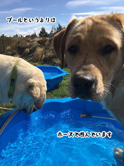 30092019_dog2.jpg