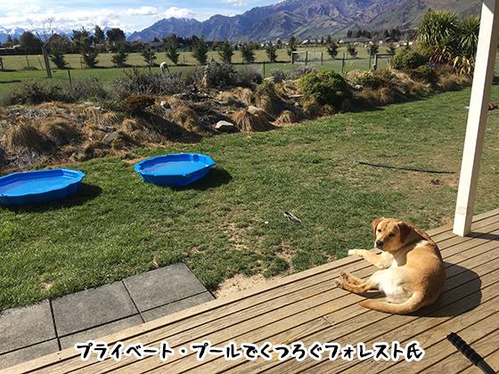 30092019_dog3.jpg