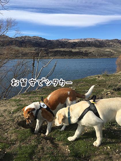 31082019_dog3.jpg