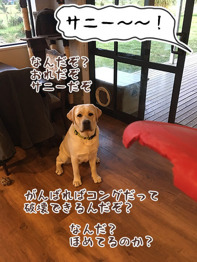 IMG_dogpic5.jpg