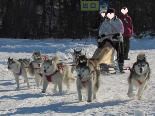 犬橇多頭引き女子第一チーム
