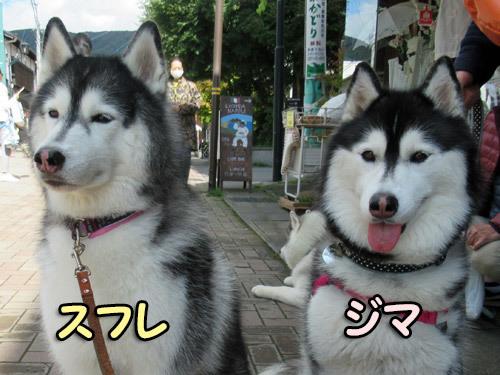ブヒ鼻スフレ&ジマちゃん
