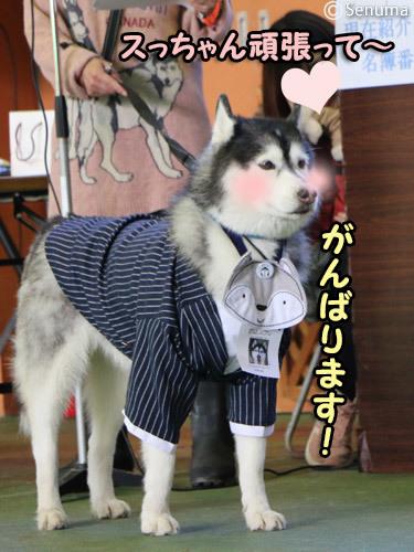 第13回ハスまみれ紹介タイム 司会犬スフレ