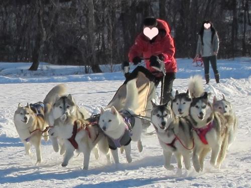 犬橇多頭引き女子第二チーム