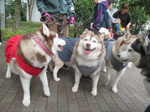 医獣祭のハスキーズ