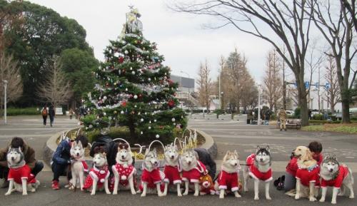 ハスキーズ・クリスマスウォーク2019
