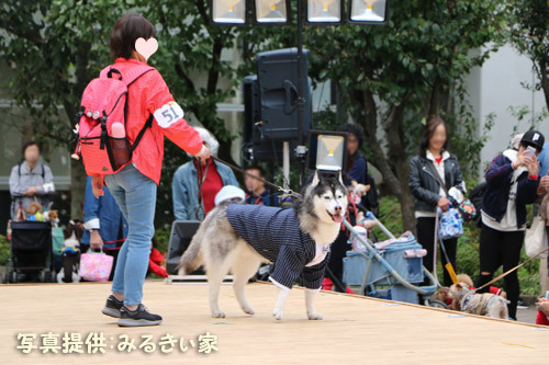 医獣祭ペットショーのスフレ