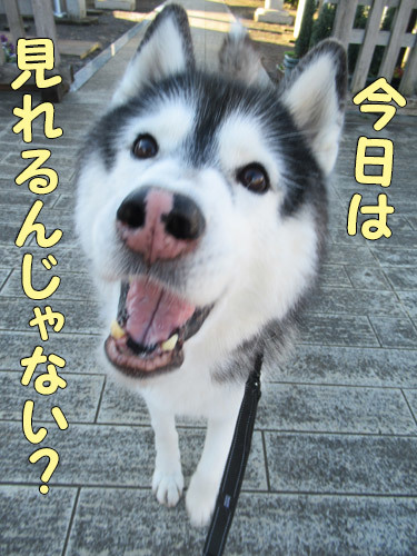ダイアモンド富士見れるかな?