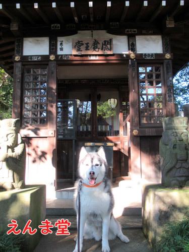 三鷹井口院