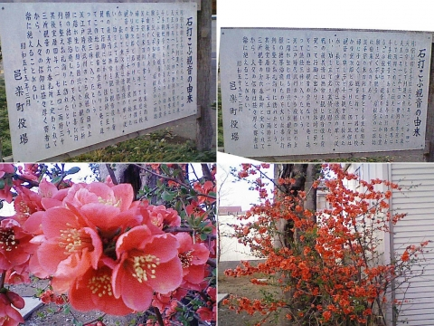 こぶ観音の桜201303(その4)