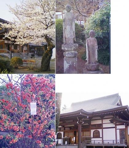こぶ観音の桜201303(その3)