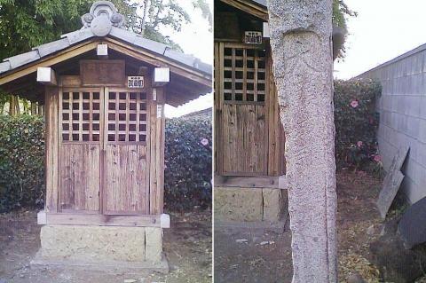 邑楽町中野、長良神社の桜201303(その1)