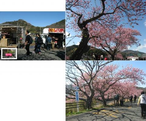 09河津桜の並木(連結その8)
