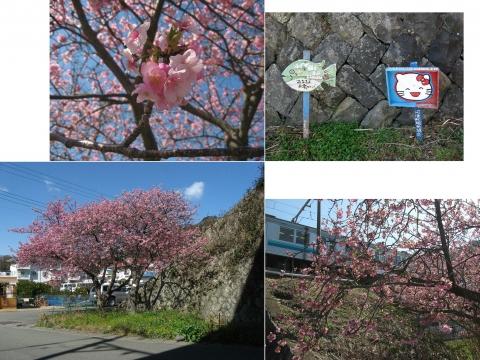 07河津桜の並木(連結その6)