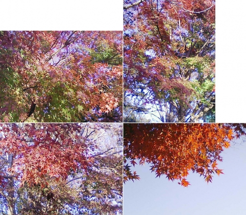 栃木市川原田町、運動公園の紅葉など(連結その4)
