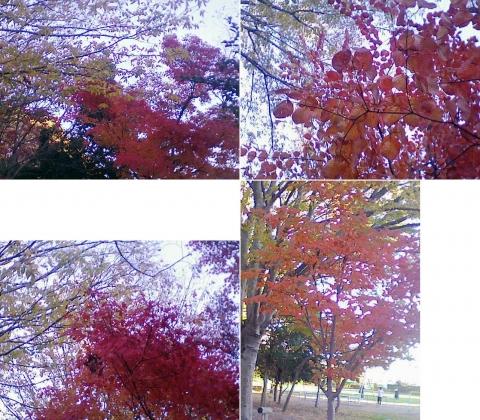 栃木市川原田町、運動公園の紅葉など(連結その2)