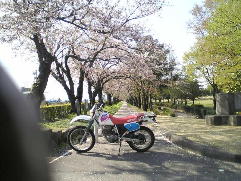 https://blogs.yahoo.co.jp/IMG/ybi/1/b1/f5/icarus777z/folder/1814451/img_1814451_64357733_1?1303350185