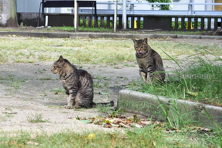 190829_cat1.jpg