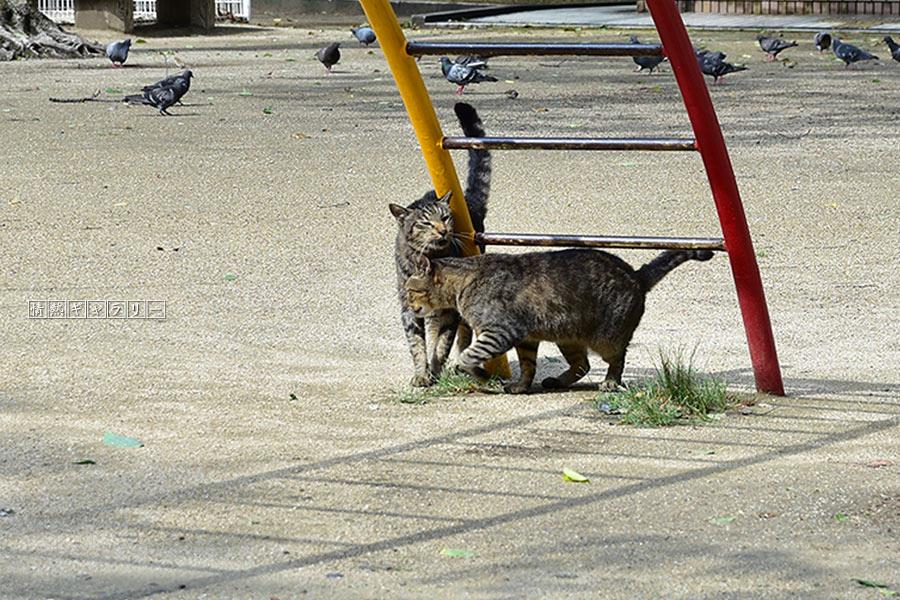 190829_cat3.jpg
