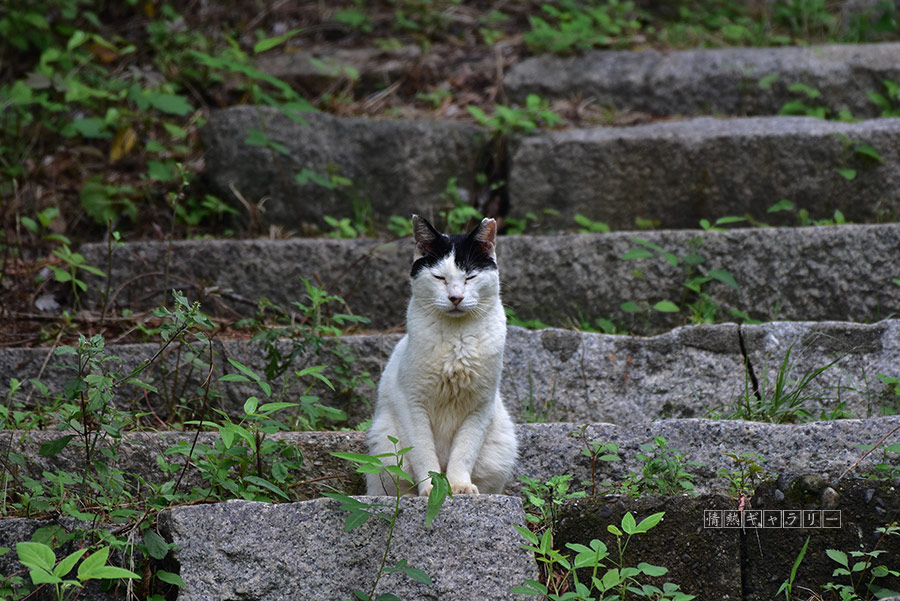 190922_cat1.jpg