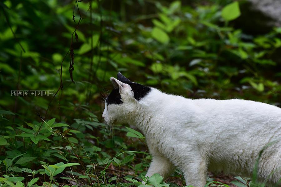 190922_cat2.jpg