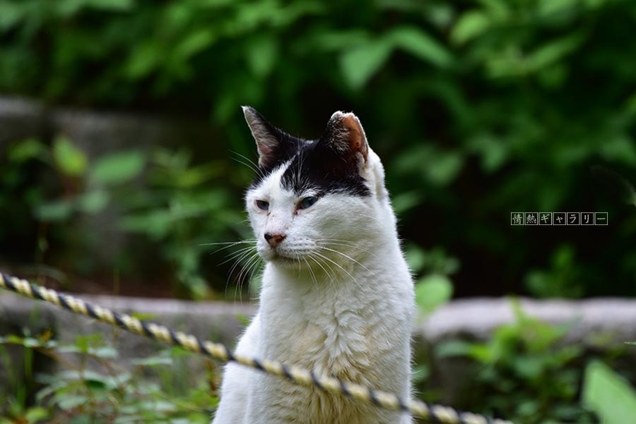 190922_cat3.jpg