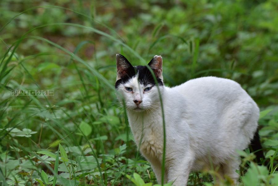 190922_cat4.jpg