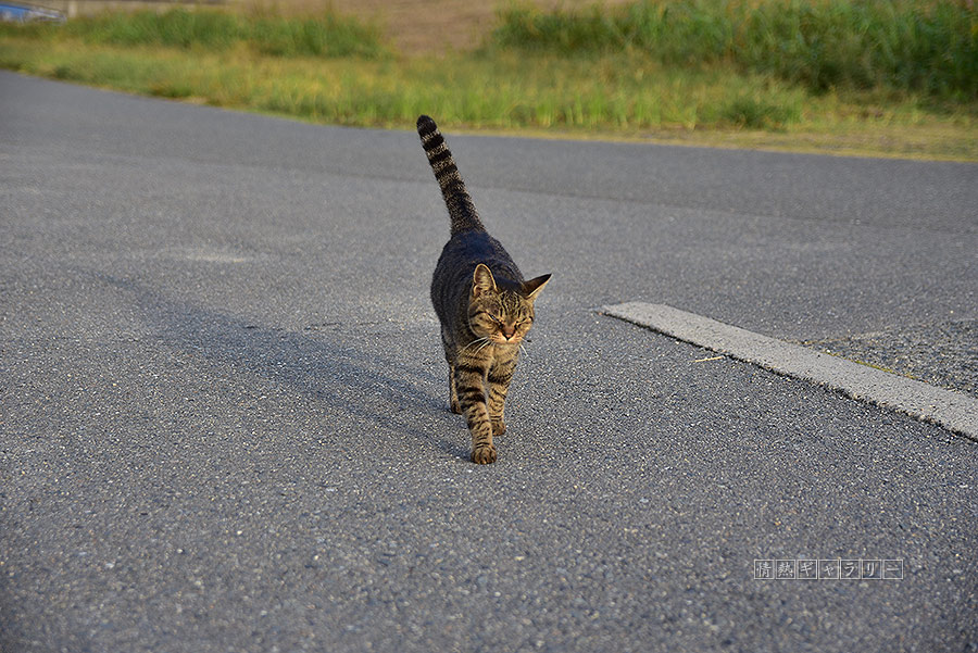 191102_cat1.jpg