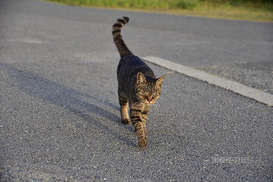 191102_cat2.jpg