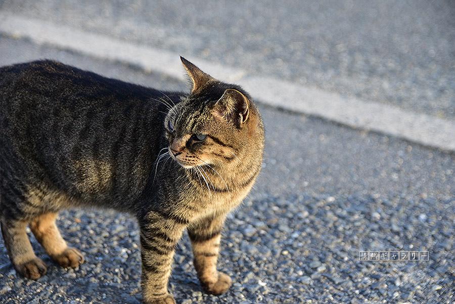 191102_cat3.jpg