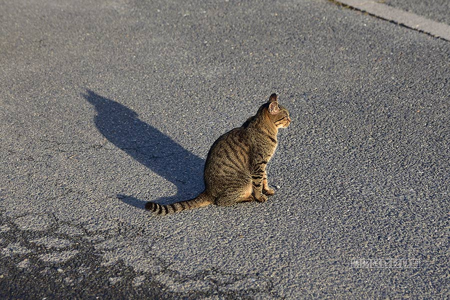 191102_cat4.jpg