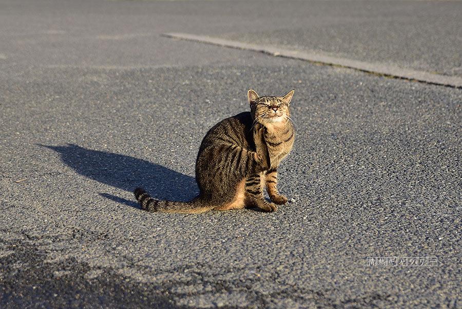 191102_cat5.jpg