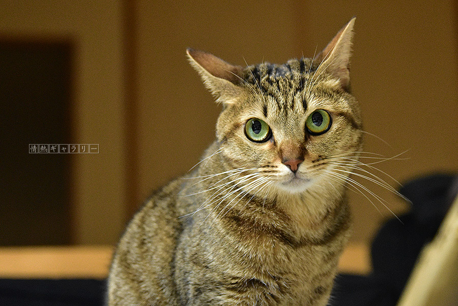 191226_cat1.jpg