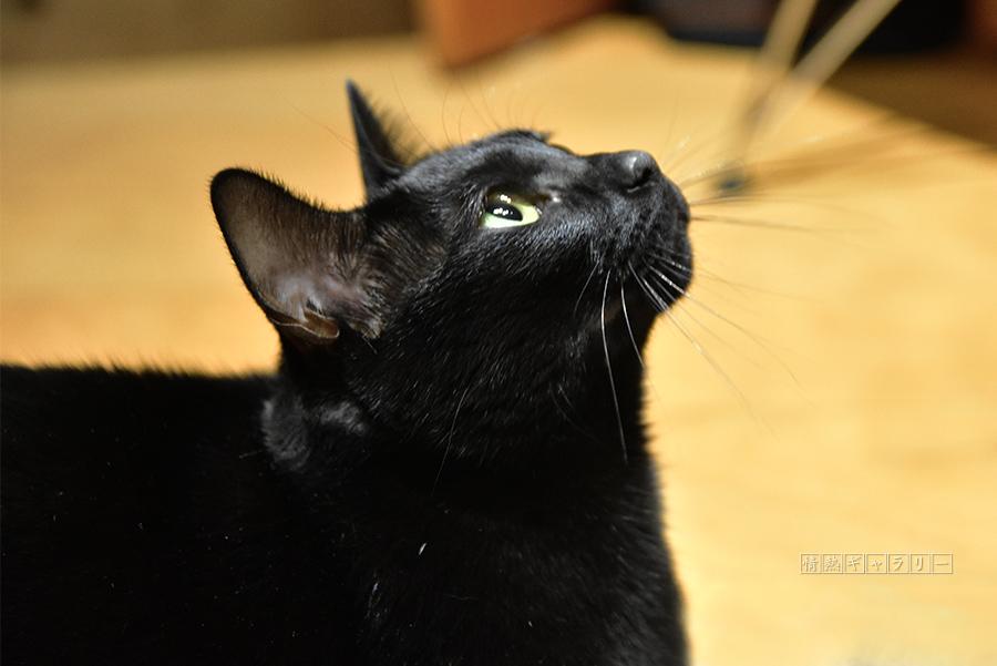 191226_cat4.jpg